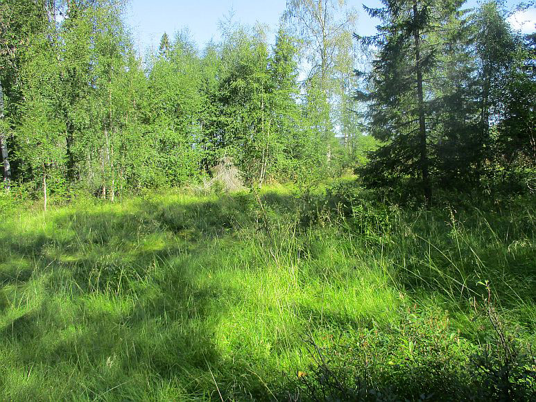 The site of the Genberg family's croft in Rismyra, on the western edge of Röksta